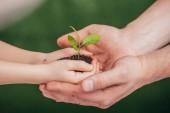 Fotografie abgeschnittene Ansicht eines Mannes, der Kinderhände mit jungen Pflanzen auf verschwommenem Hintergrund hält, Earth Day Konzept