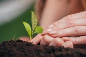 selective focus of woman and child hands planting young plant on blurred background, earth day concept