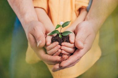 Selective focus of man holding kid hands with young plant on blurred background, earth day concept stock vector