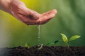 částečný pohled člověka zalévání mladých zelených rostlin na rozostřeného pozadí, koncept den země