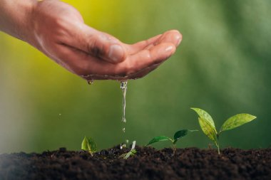 partial view of man watering young green plant on blurred background, earth day concept
