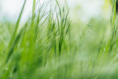 Close up of green and fresh grass stock vector