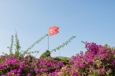 With blue sky,Turkish flag waves on the top of Castle of St. Peter or Bodrum Castle, and flower on the foreground.