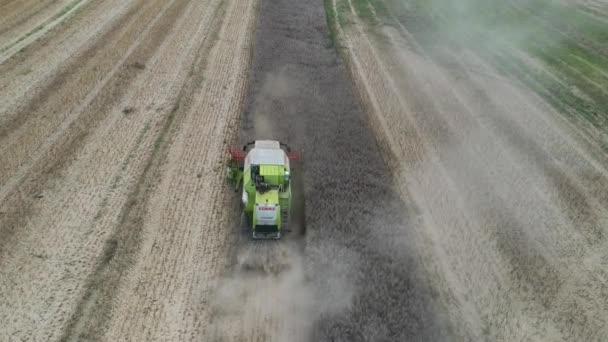 kombinovat sběr řepkového semene, filmoval z dronu