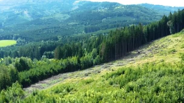 Louky a Les v poledne ve střední Evropě v letním období, tento klip je k dispozici ve dvou různých odstuptech, DLOG 10bitová barva nebo DJI barevný Lút .