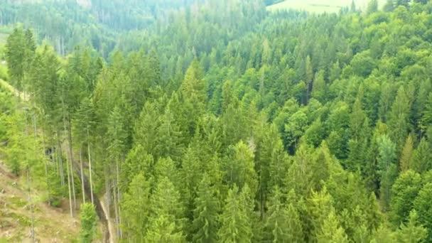 Krásné louky a lesík, který je vzdušný výhled, tento klip je k dostání ve dvou různých stupidkách, DLOG 10bitová barva nebo DJI barevný Lút .