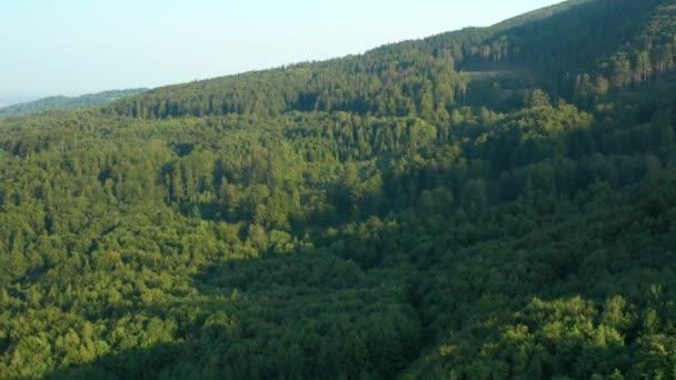 Luftaufnahmen von Wald und Bergen