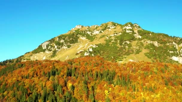 Aerial Shot Of beautifully colored trees in the mountains in autumn