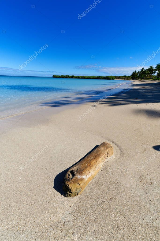 Tree log washed up on a pacific island beach