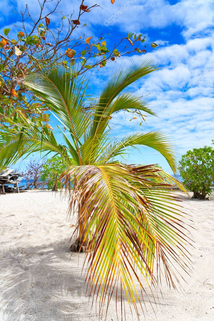 Palm tree on a white sandy beach in Fiji