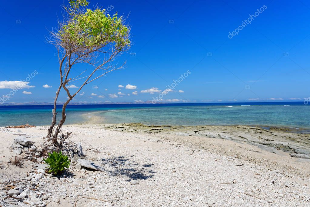 Tree on a white sandy beach on a Pacific Island