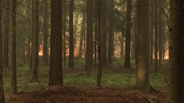 Les v ohni, hořící stromy, pouzdra, vypalování suché trávy v rašeliniště.