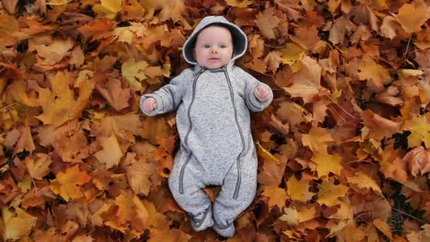 Újdonság Baby Play levelekkel őszi lombozat. Baba portré őszi sárga levelek, kisgyermek és őszi levelek a parkban