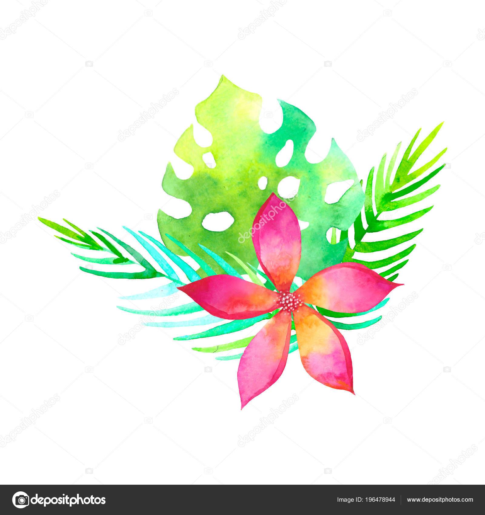 Dibujo Tradicional Bouquet Tropical Acuarela Pintura Acuarela Flor