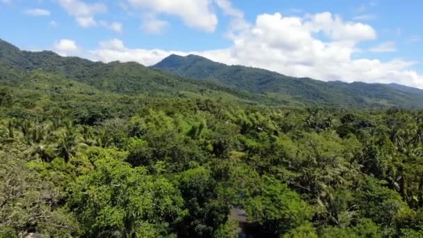 Amazing forest landscape footage