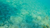 vista subacquea mare come sfondo