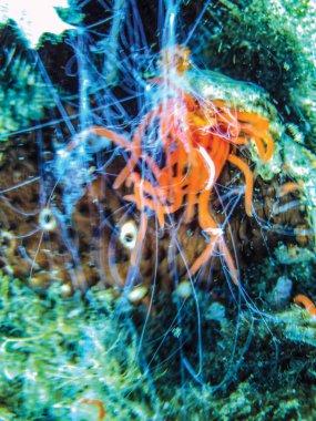 close up of sea cucumber underwater