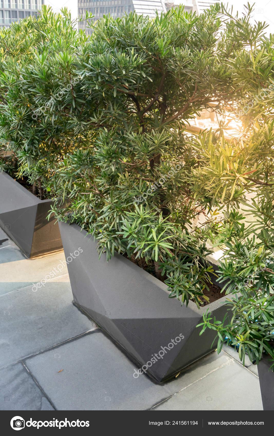 Macetas Rectangulares Diseño Moderno Con Plantar Terraza