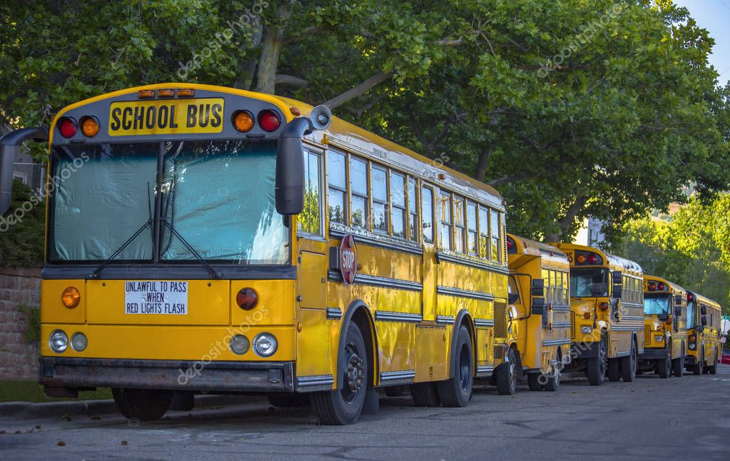 School buses lined up in the shade under green trees