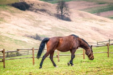 Rural landscape with horse grazing green meadow.