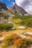 Horská krajina, The Mlynicka údolí Vysoké Tatry národní Park, Slovensko, Evropa