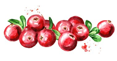 Cranberry. Heap of fresh ripe berries with leaves. Hand drawn watercolor illustration  isolated on white background
