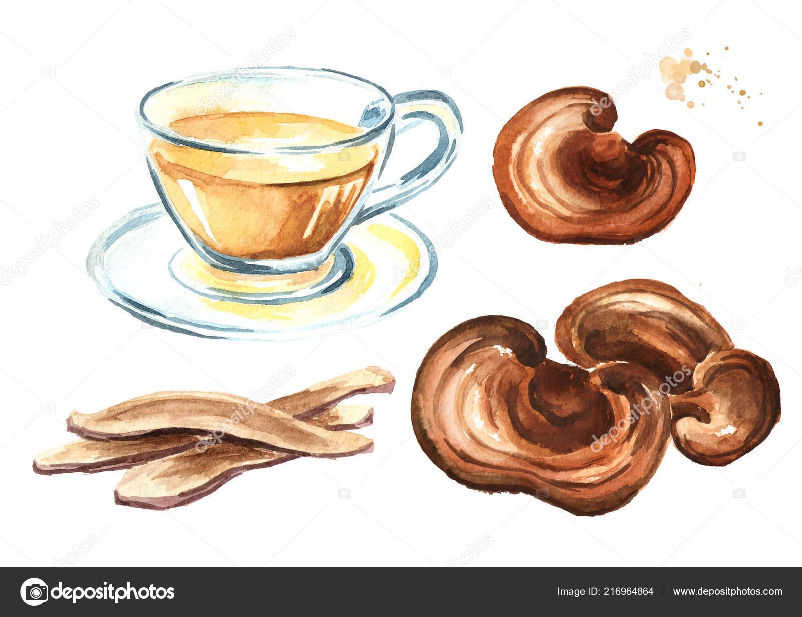 Mushroom tea set | Lingzhi Mushroom Reishi Mushroom Slice