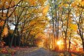 Způsobem v barevné podzimní les s zapadajícího slunce