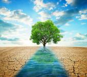 trockenes Land mit rissigem Boden und Weg vom Wasser in den Sonnenuntergang. Konzept Klimawandel oder globale Erwärmung.