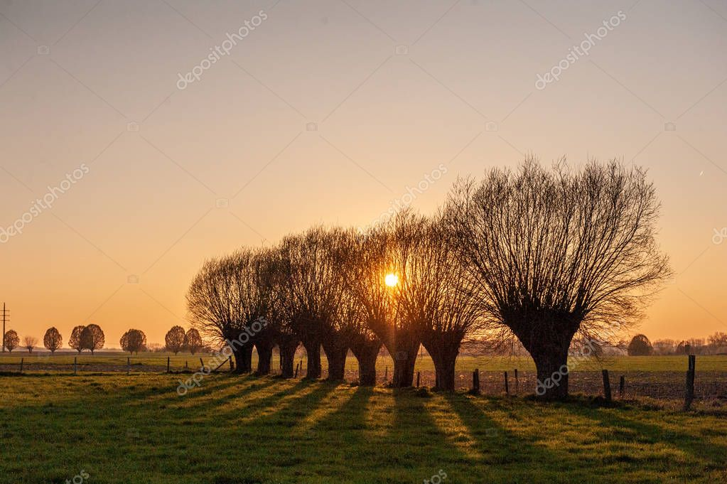A line of trees near Sunset