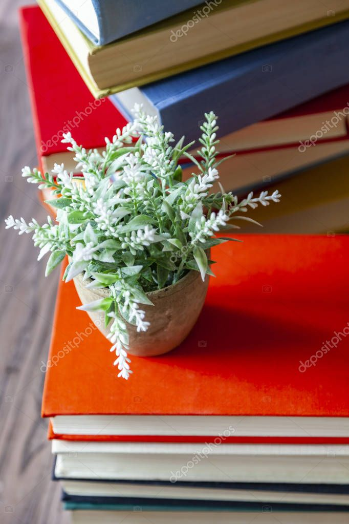 Houseplant on a pile of vintage books in multi-colored covers