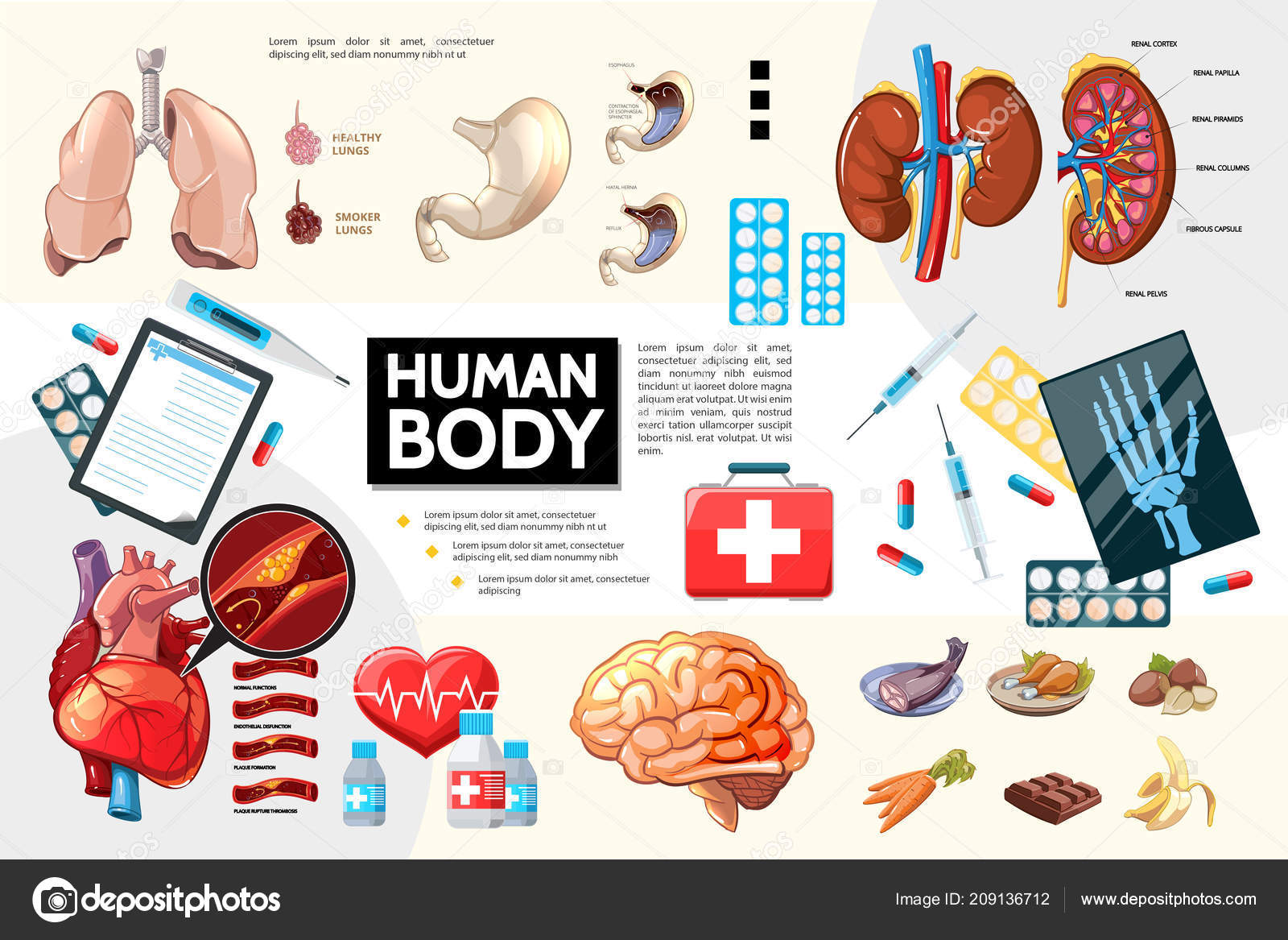 Cartone Animato Corpo Umano Anatomia Infographics Vettoriali Stock
