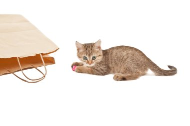 Playful cute kitten with pink paper on its paws isolated on white