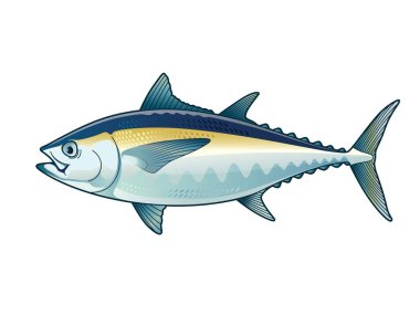 bluefin tuna fish premium vector download for commercial use format eps cdr ai svg vector illustration graphic art design bluefin tuna fish premium vector