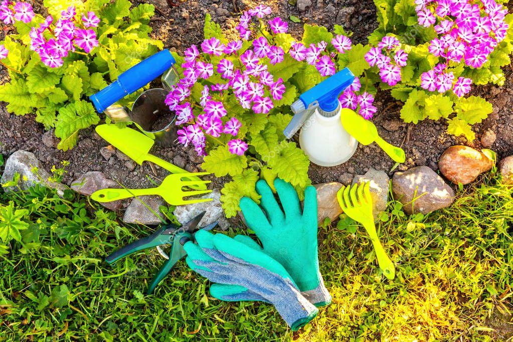 Gardening tools, shovel, spade, pruner, rake, glove, primrose flower on bed background. Spring or summer in the garden, eco, nature, horticulture hobby concept