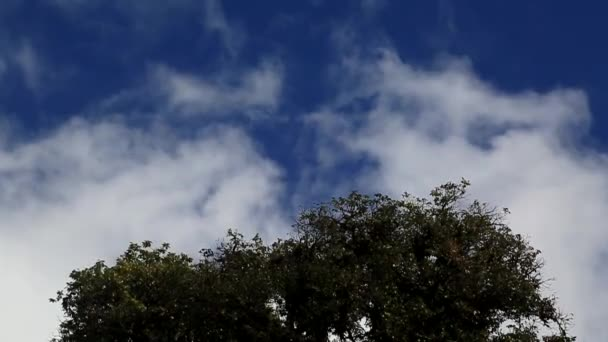 Footage green tree background cloud moving on blue sky.