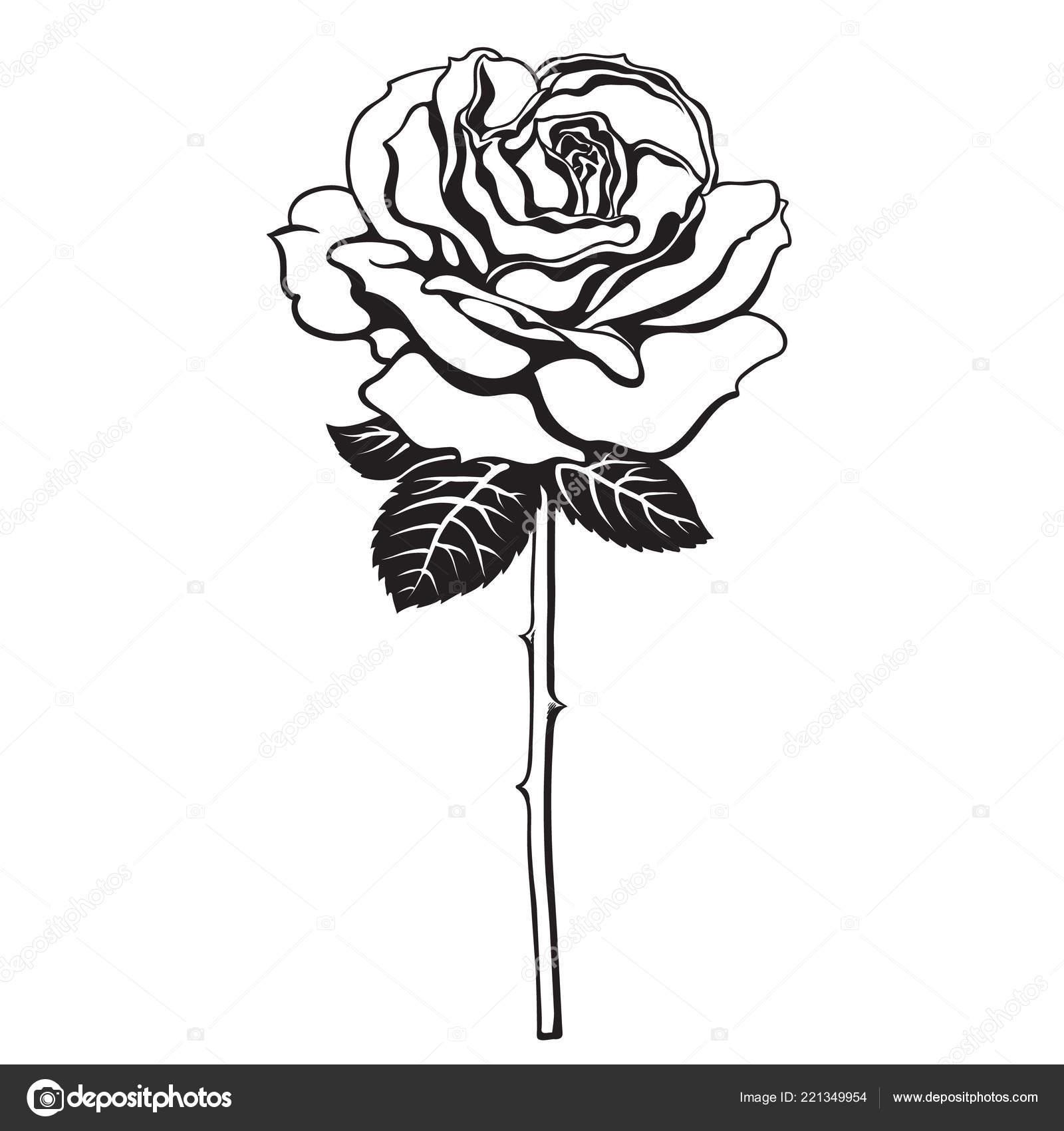 Black And White Rose Blume Mit Blätter Und Stengel Hand Gezeichnet