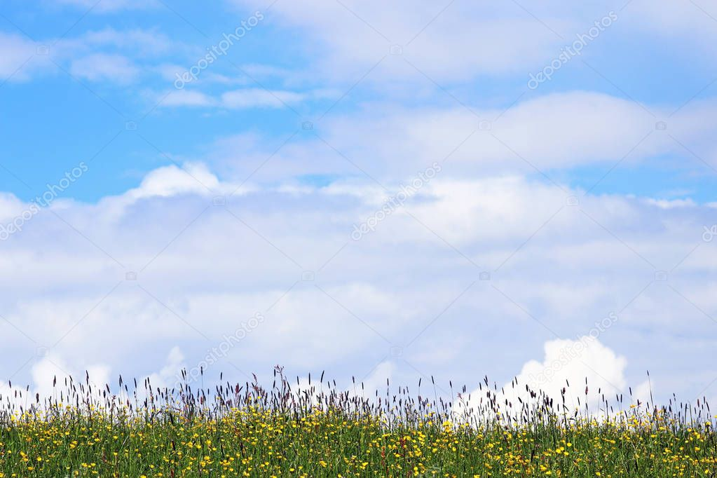 Spring meadow with flowers and white-blue sky. Clouds in the sky above a flowering meadow in spring or summer.