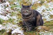 Vtipný pohled tlusté kočky