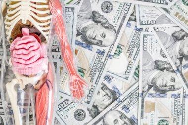 Human body model with skeleton and internal organs over us dollar money background. Transplantation concept. Expenses of treatment. Black market.