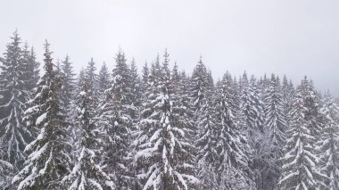 Aerial view of the snow-covered pine branches.