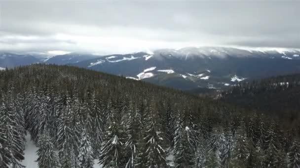 A légi felvétel a havas fenyő