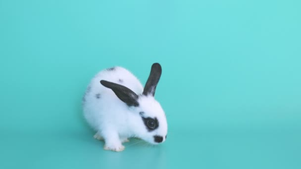 Small white rabbit with black dot jumping out from green frame