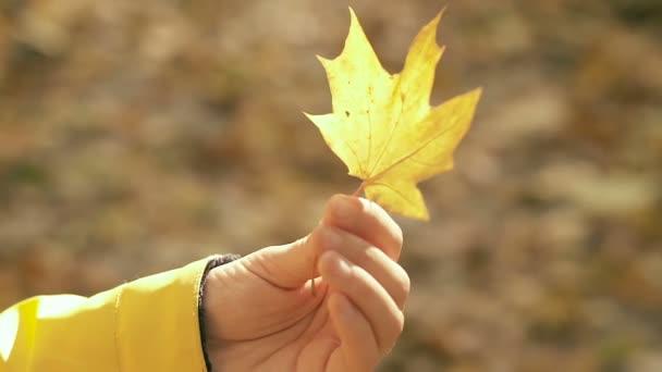 Nők kezében sárga juharfalevél. Közelről. Lassított felvétel.