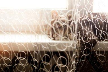 Grey cat is sleeping on the windowsill