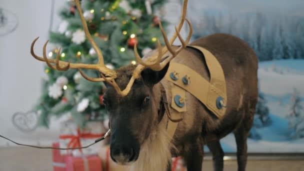 A karácsonyfa közelében rénszarvas