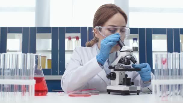 ženské vědec v brýle pomocí pipety s Petriho misek a dívat se skrz mikroskop během experimentu s kolegou na pozadí