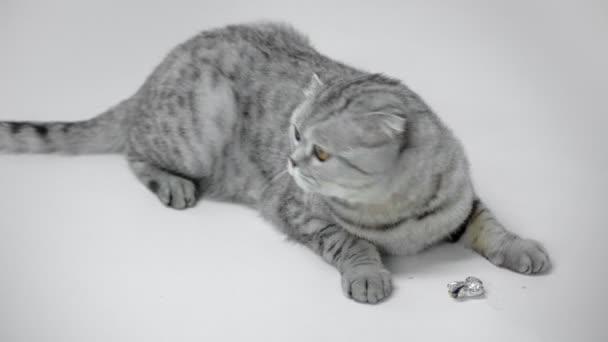 szürke macska feküdt, nyalás orr, integetett a farok, és látszó-hoz játék a fehér háttér