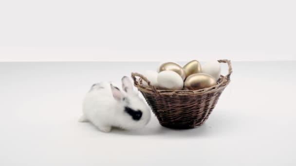 aranyos foltos nyúl gyaloglás közelében kosár festett húsvéti tojásokat, fehér háttér