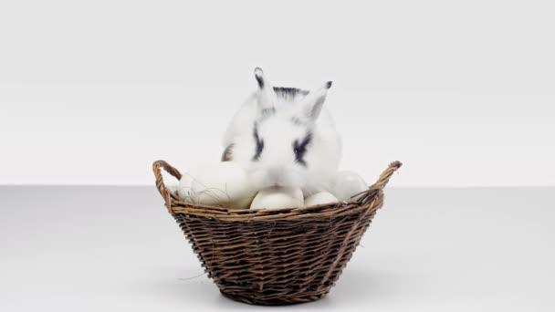 roztomilý králík s černými skvrnami na čenichu vlnící nos a sedí v koši s vejce na bílém pozadí